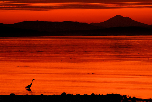 Sunrise Heron Silhouette (photo: Brandon Godfrey)