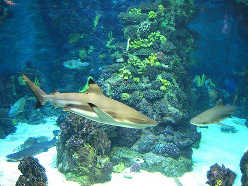 aquarium barcelona un voyage au milieu des requins