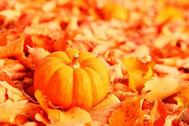 Fêter Halloween aux Etats-Unis