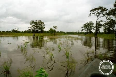 Les bayous de Louisiane