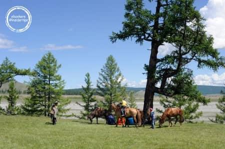 Des chevaux et des hommes dans la nature