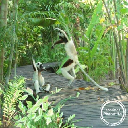 Piscine naturelle dans le parc national du massif d'Isalo
