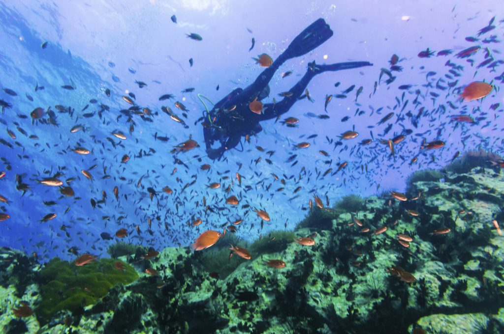 Scuba Diver on coral reef in clear blue water, Diving at South West Pinnacle on Koh Tao, Thailand