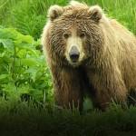 03_Bear