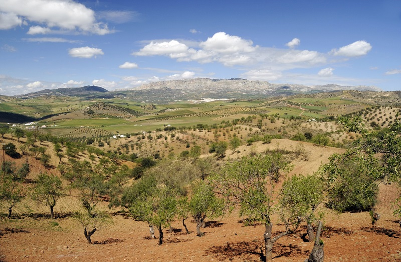 Andalusian landscape in springtime
